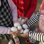 egghunting2014